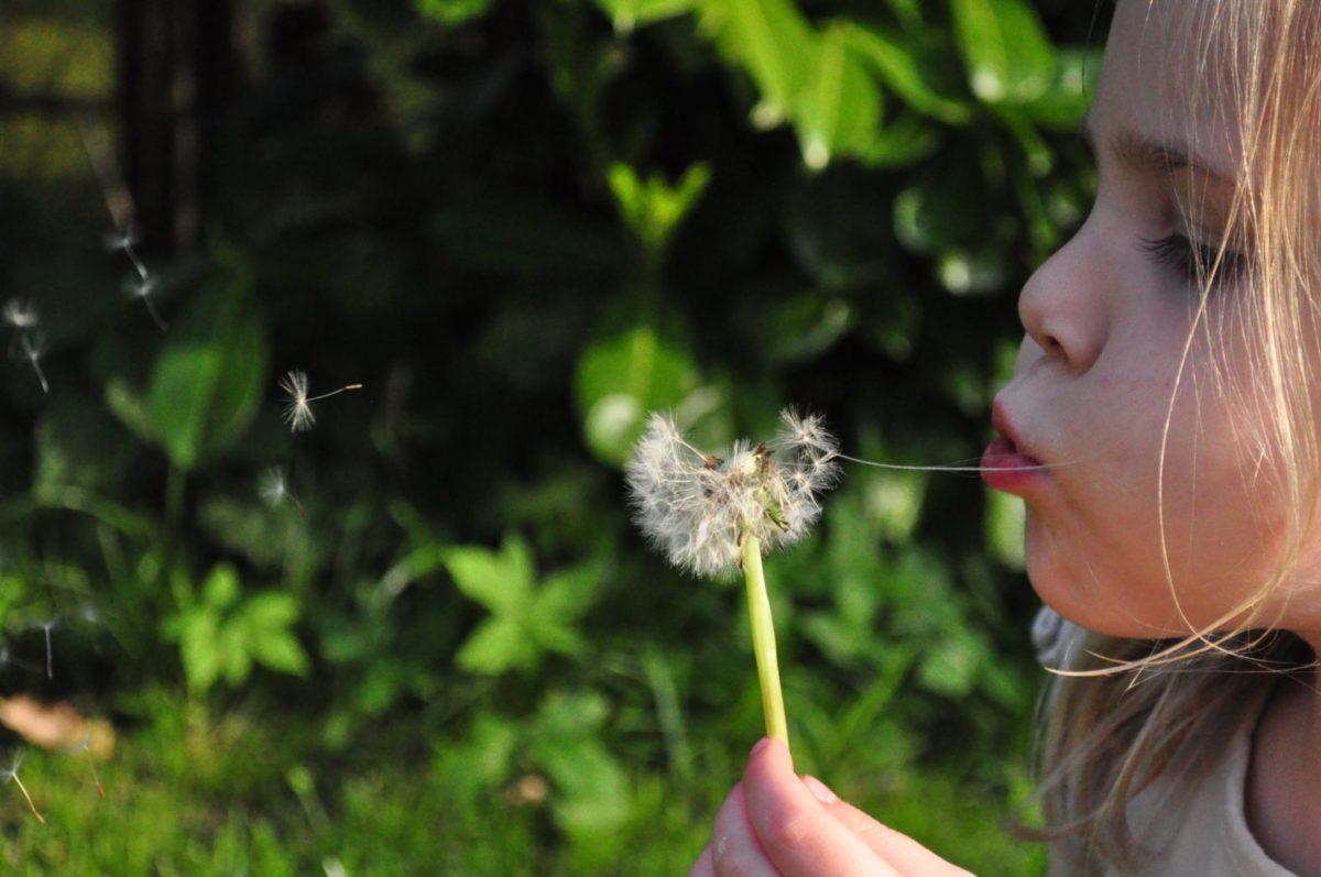 Un enfant est un train de souffler sur un pissenlit pour prendre conscience de sa respiration